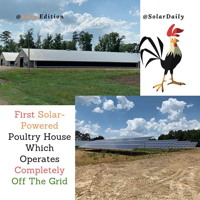 First Solar-Powered Poultry House Which Operates Completely Off The Grid