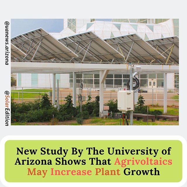 New Study By Arizona University Shows That Agrivoltaics may Increase Plant Growth